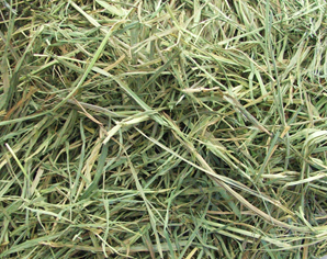 APD Timothy GOLD Hay 25# (2nd Cut)