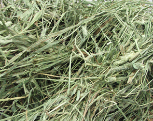 APD Timothy High Fiber Hay 5# (1st Cut)